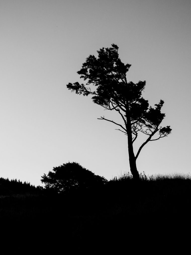James Schumacher Photography - Coastal Tree Silhouette